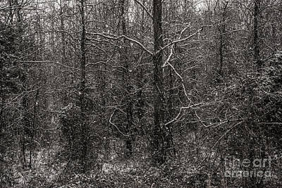 Photograph - Black Snow by Jason Kolenda