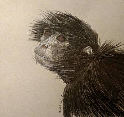Painting - Black Spider Monkey by Joan Mansson