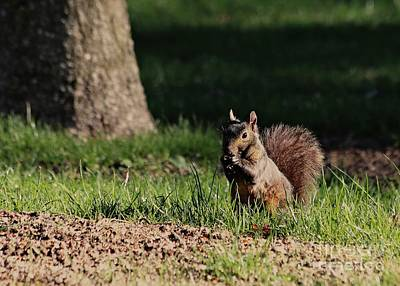 Photograph - Black Squirrel by Kenny Glotfelty