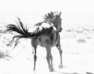 Photograph - Black Stallion Wild Horse by Jerry Cowart