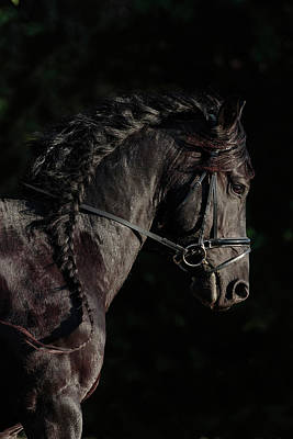 Photograph - Black Steed by Wes and Dotty Weber