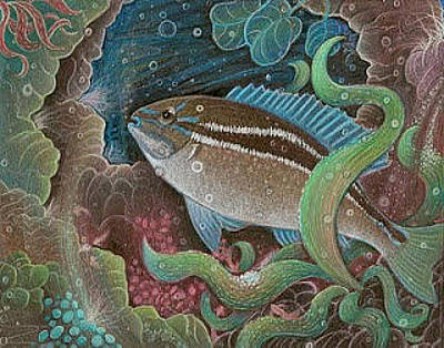 Drawing - Black-striped Butterfish by Jude Cowell