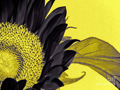 Black Sunflower Art Print by Karen Lewis