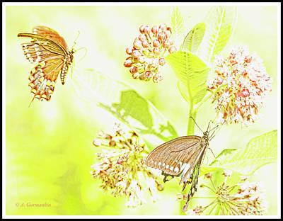 Digital Art - Black Swallowtail Butterflies, Male And Female, Milkweed Flowers by A Gurmankin