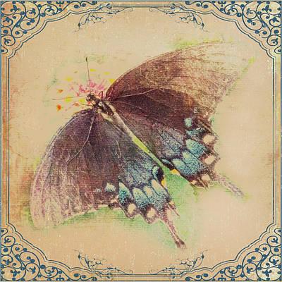 Black Swallowtail Butterfly Framed  Art Print