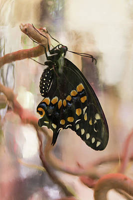 Photograph - Black Swallowtail Butterfly In A Jar by MM Anderson