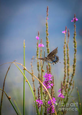 Photograph - Black Swallowtail Butterfly On Beach by Brad Marzolf Photography