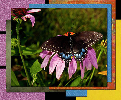 Photograph - Black Swallowtail Butterfly by Patti Deters