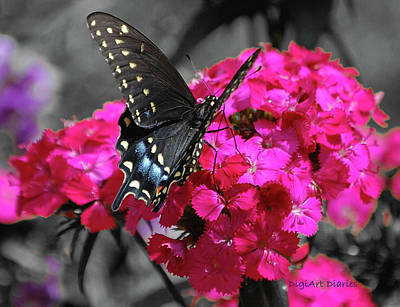 Digital Art - Black Swallowtail by DigiArt Diaries by Vicky B Fuller