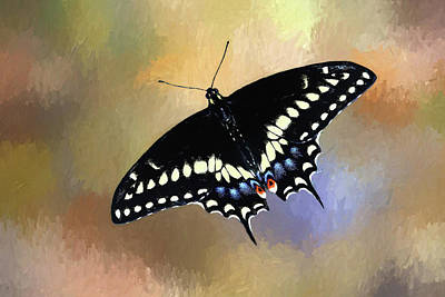 Photograph - Black Swallowtail by Donna Kennedy