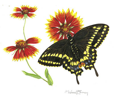 Painting - Black Swallowtail by Michael Earney