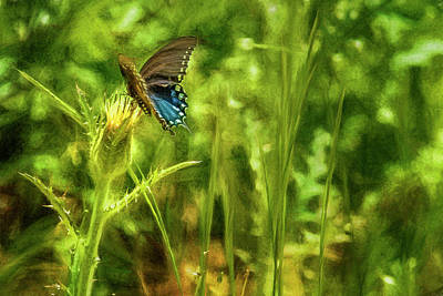 Photograph - Black Swallowtail No. 2 Painterly by Belinda Greb