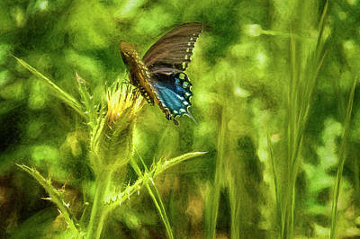 Photograph - Black Swallowtail No. 2 Painterly Closer by Belinda Greb