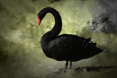 Photograph - Black Swan 2 by Donna Kennedy