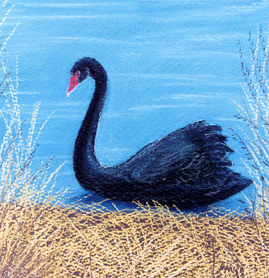 Pastel - Black Swan by Jan Amiss