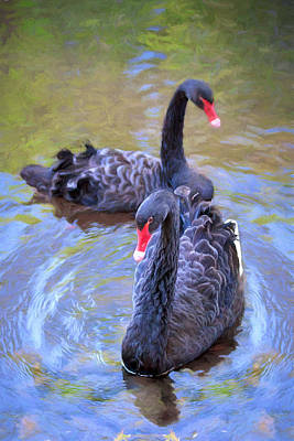Art Print featuring the photograph Black Swans by Susan Rissi Tregoning