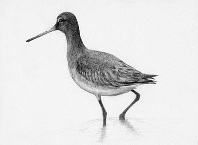 Coastal Drawing - Black Tailed Godwit Bird by Stevie the floating artist