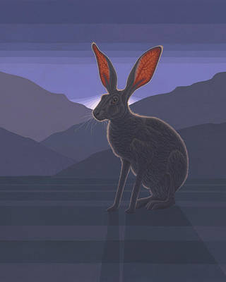 Black-tailed Jackrabbit Art Print by Nathan Marcy