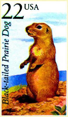 Black-tailed Prairie Dog Art Print by Lanjee Chee