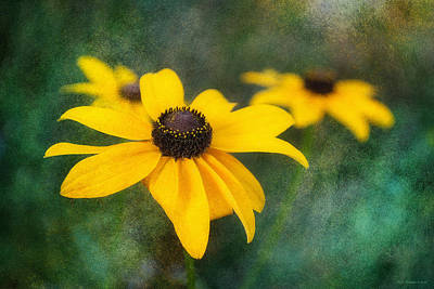 Photograph - Black Eyed Susans by WB Johnston