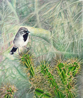 Susan Conner Drawing - Black Throated Beauty by Susan Conner