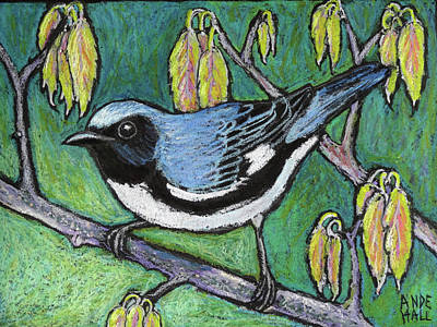 Warbler Painting - Black Throated Blue Warbler by Ande Hall