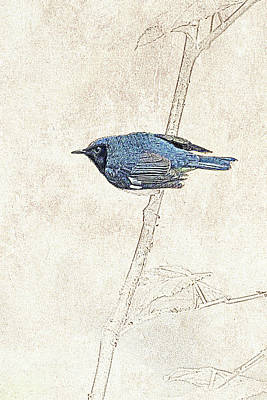 Photograph - Black-throated Blue Warbler Photographic Drawing by Dawn Currie
