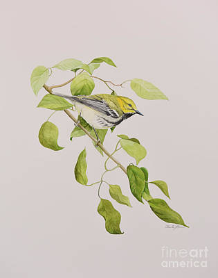 Painting - Black-throated Green Warbler by Charles Owens