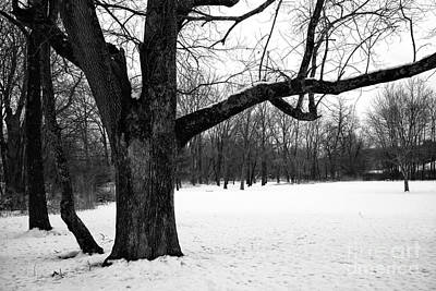 Photograph - Black Tree In Winter by John Rizzuto