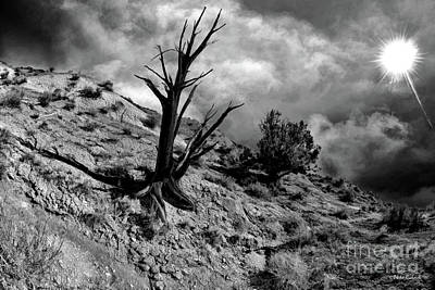 Photograph - Black Tree Pahreah Ghost Town by Blake Richards