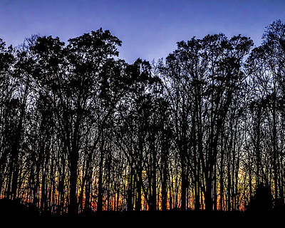 Photograph - Black Trees by Onyonet  Photo Studios