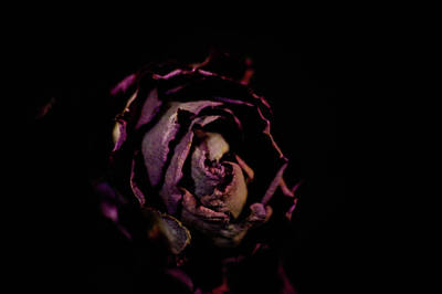 Kitchen Spices And Herbs - Black Velvet Rose by Victor Wiebe