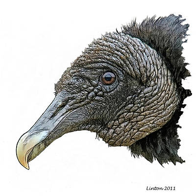 Vulture Digital Art - Black Vulture 2 by Larry Linton