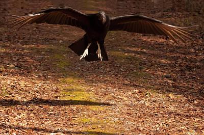 Vulture Digital Art - Black Vulture Landing by Chris Flees