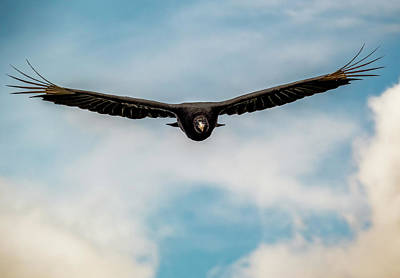 Photograph - Black Vulture Over State Line Lookout by Jorge Perez - BlueBeardImagery