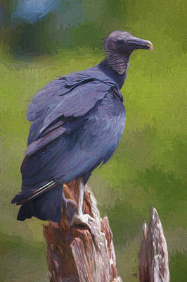 Photograph - Black Vulture Parque Panaca Colombia by Adam Rainoff