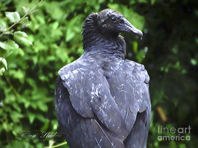 Photograph - Black Vultures by Melissa Messick