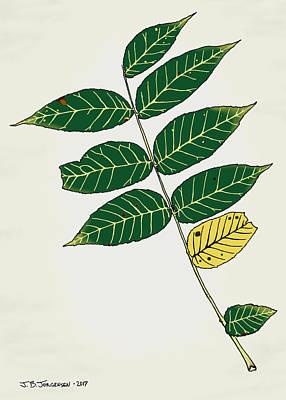 Black Walnut Leaf Illustration Art Print by Jamie Jorgensen