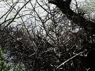 Black Walnut Spikes II Print by Anna Villarreal Garbis