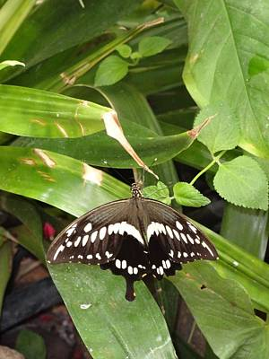 Photograph - Black White Butterfly Green All Over by Mozelle Beigel Martin