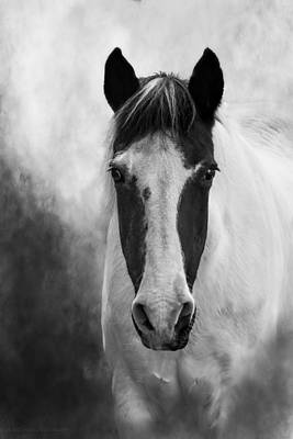 Photograph - Black White Horse Photography, Mystic Mare by Melissa Bittinger