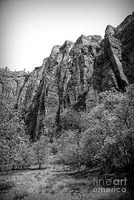 Photograph - Black White Nature Zion National Park Utah  by Chuck Kuhn