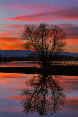 Photograph - Black Willow Sunset by Kathleen Bishop
