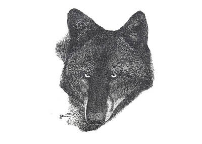 Yellowstone Drawing - Black Wolf by George Bumann