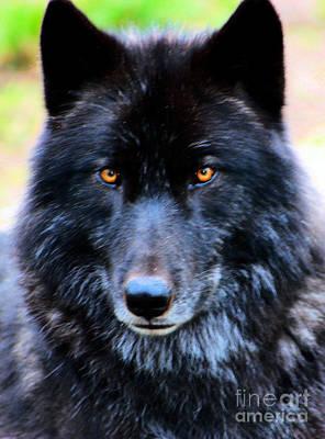 Black Wolf Art Print