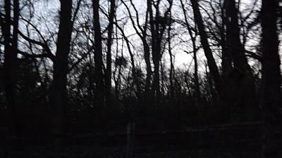Black Woods Original by Don Koester
