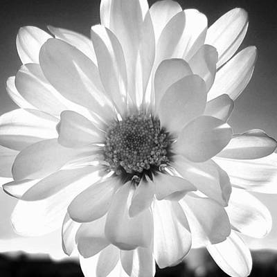 Daisies Photograph - #blackandwhite #contrast #flowers by Megan Ater
