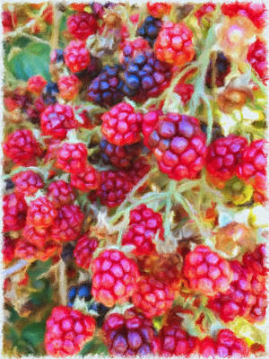 Photograph - Blackberries by Jonathan Nguyen
