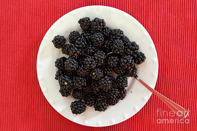 Photograph - Blackberries by Tatiana Travelways
