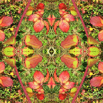 Digital Art - Blackberry Autumn by Diane Macdonald